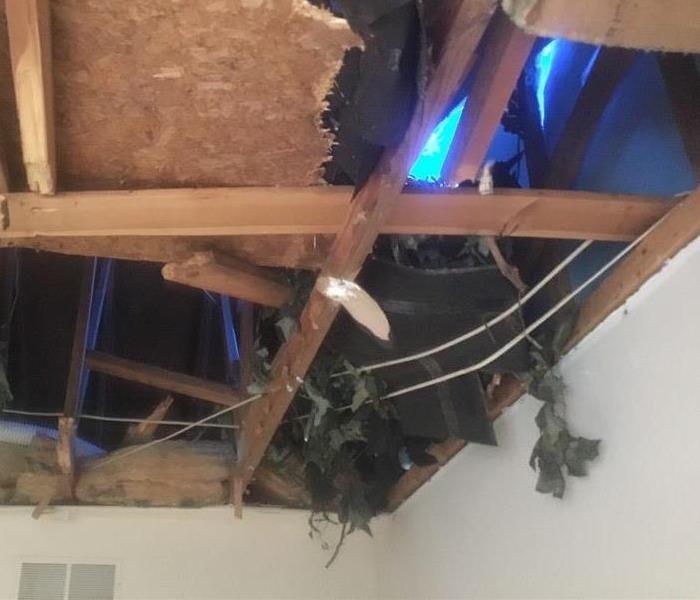 ceiling in living room open with tree through it